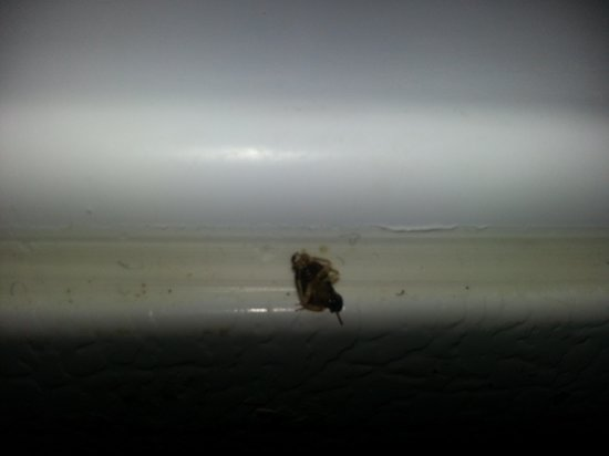 Ramada Orlando Downtown: roaches inside fridge