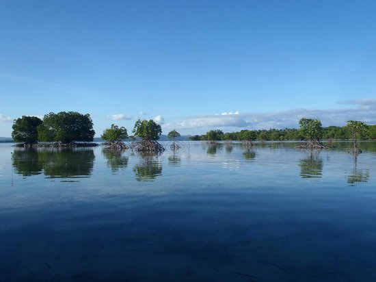 Dos Palmas Island Resort & Spa: マングローブ