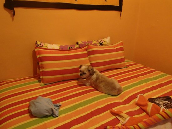 Casa Zuzy Apartments : My friend Rock came for a sleepover