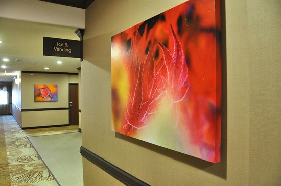 Best Western Plus Texoma Hotel & Suites: Bold artwork provide splashes of color in hallways.