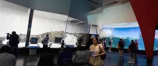 Sea Life Melbourne Aquarium: Penguin Enclosure