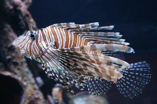 Sea Life Melbourne Aquarium: Fish