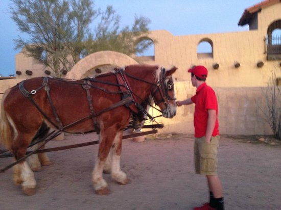 Fort McDowell Adventures: petting the horse