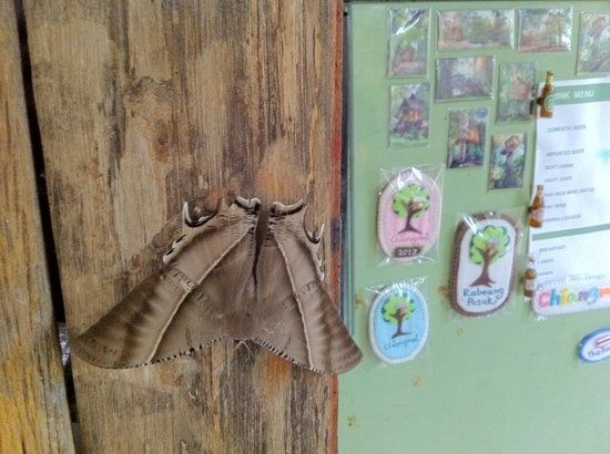 Rabeang Pasak Tree House Resort: Magnets and butterfly