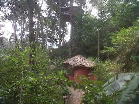 Ela Ecoland Nature Retreat: tree house and resturant