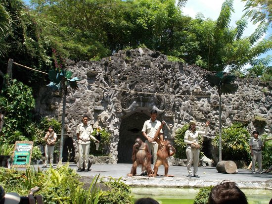 Bali Safari & Marine Park : Educational show