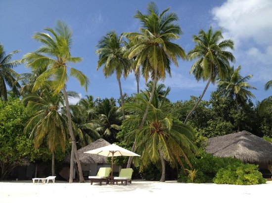 Vakarufalhi Island Resort: Small island with palm trees