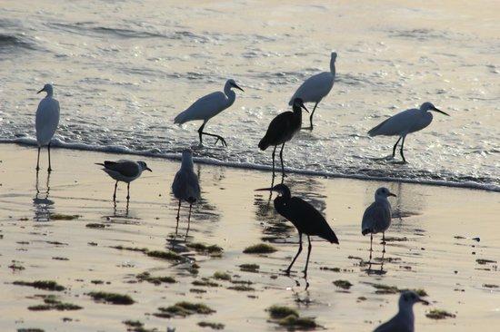 Laguna Beach : attente des poissons