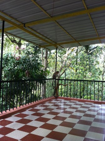 Sumilayam Jungle View Homestay: Balcony with monkey
