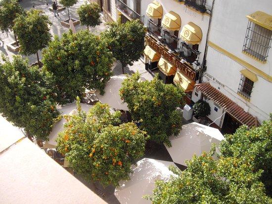 Hotel Dona Manuela : Uitzicht op de sinaasappelboompjes