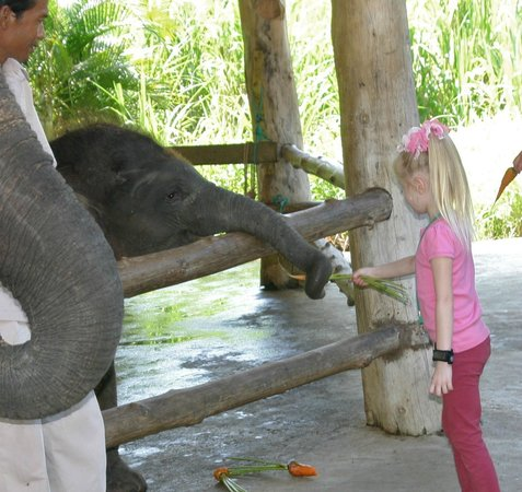 Bali Zoo: Feeding baby elephants