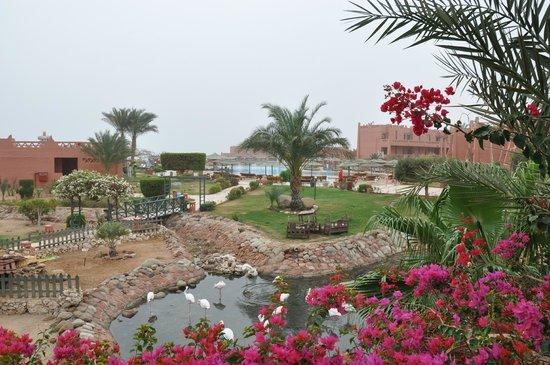 Hauza Beach Resort : Вид на бассейн