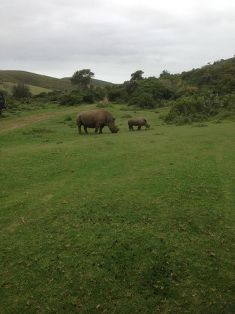 Botlierskop Private Game Reserve : Such a nice moment!