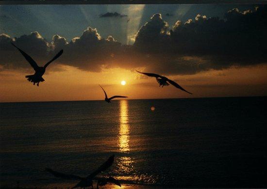 Belleair Beach Resort : Sun set from my room