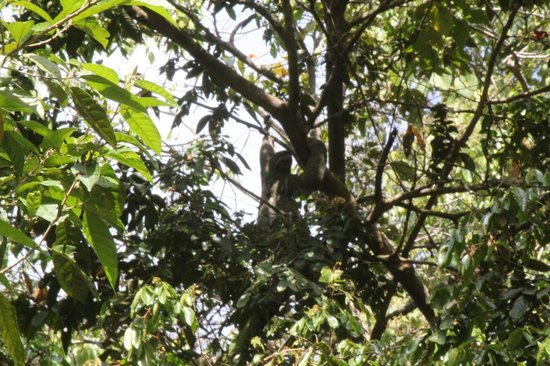 Playa Manuel Antonio: Typical view of something in a tree