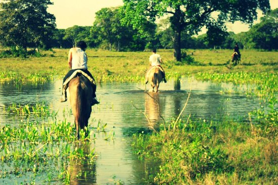 Pousada Piuval: Passeio a cavalo pelo pantanal