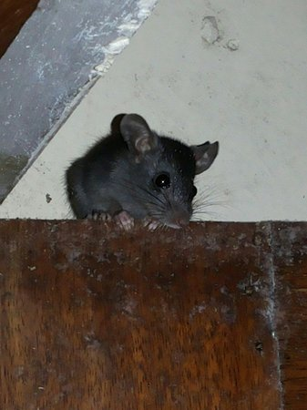 Ezile Bay Village: Mouse in toilets