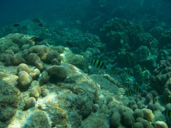 Mu Ko Surin National Park : น้ำใสๆ ใต้ทะเลของหมู่เกาะสุรินทร์ค่อนข้างสมบูรณ์