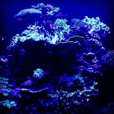 Lisbon Oceanarium : La teca dei coralli