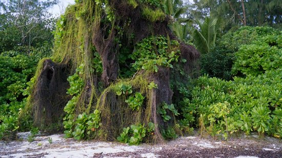 Denis Private Island Seychelles: Island surroundings