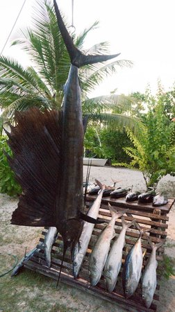 Denis Private Island Seychelles: Sailfish