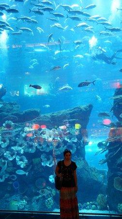 Dubai Aquarium & Underwater Zoo: Дубайский аквариум