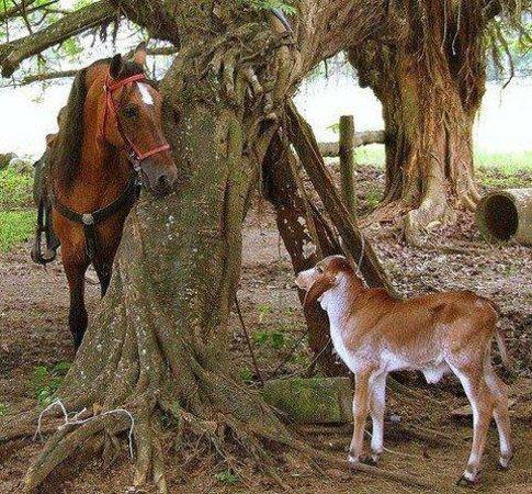 Casagua Horses Tours: Making new friends