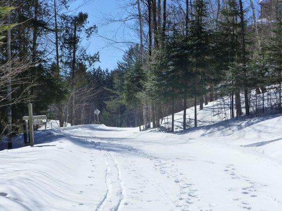 Gite le Roupillon B&B: piste de ski de fond derrière la maison