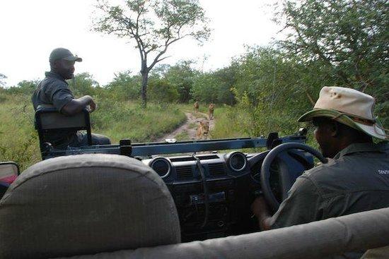 Notten's Bush Camp: jeep safari