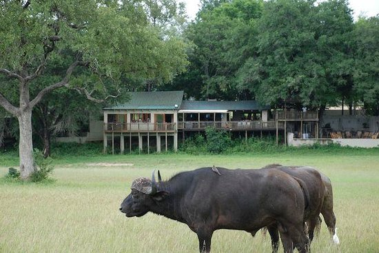 Notten's Bush Camp: Lodge