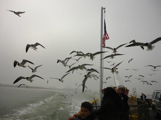 Galveston - Port Bolivar Ferry: I was afraid to get pooped on