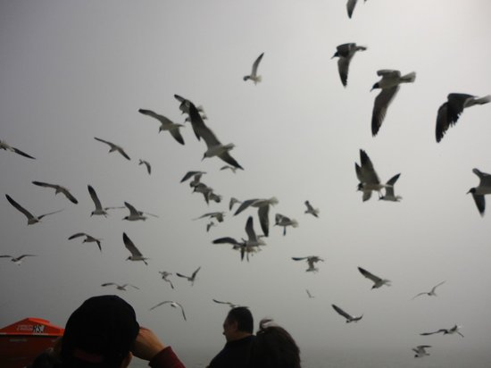 Galveston - Port Bolivar Ferry: If you feed them they will come