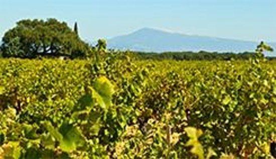 Le Gout des Autres - Wine Prestige Tour : Mer de vignes