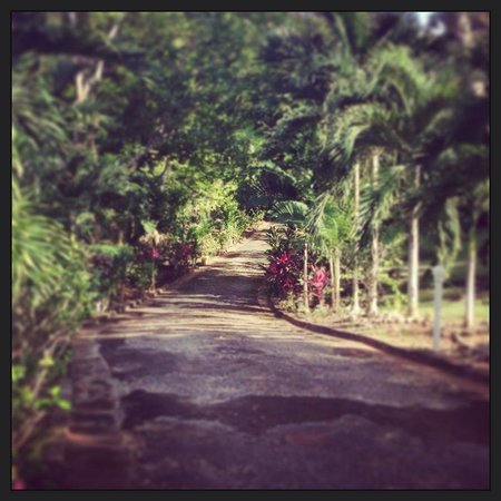 Garden House Jamaica : the amazing drive up to the house, through part of the gardens