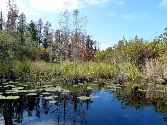 Okefenokee National Wildlife Refuge: in the middle of the Okefenokee Swamp