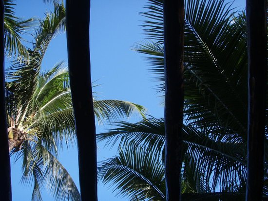 Coco's Cabanas: View from hammock