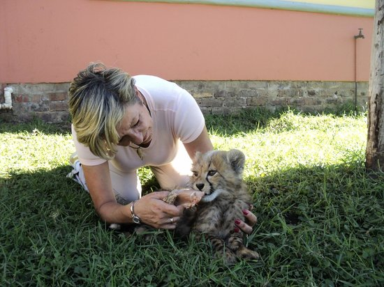 Tenikwa Wildlife Awareness Centre: feeding the babies