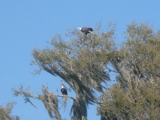 Wild Willy's Airboat Tours: What an amazing sight!