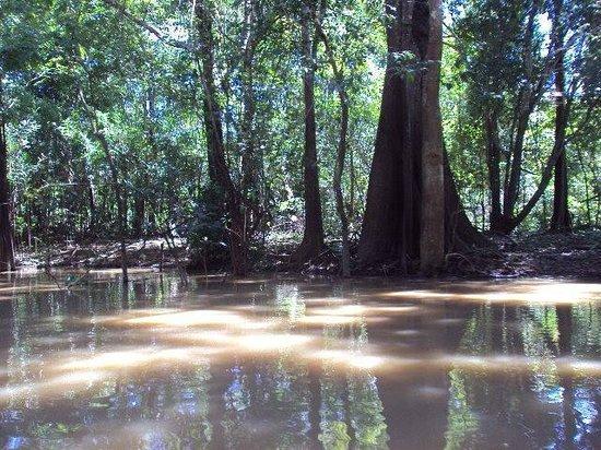 Anavilhanas Jungle Lodge: Río Solimoes