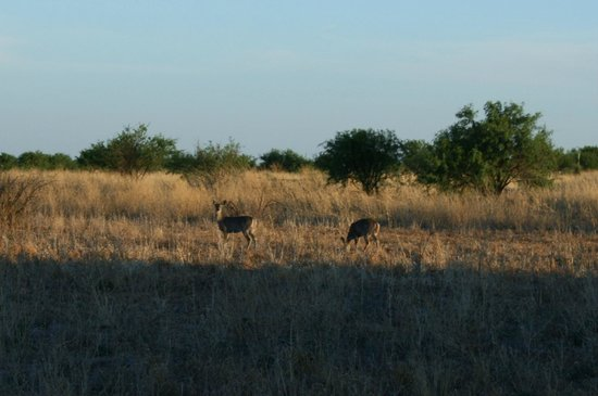 San Pedro Riparian National Conservation Area: Deer