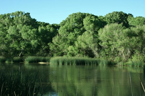 San Pedro Riparian National Conservation Area : The Pond
