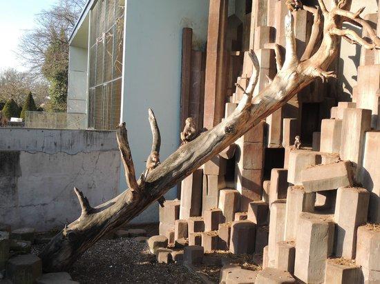 Copenhagen Zoo: Baviangrotten.