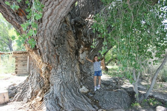 San Pedro Riparian National Conservation Area : In front of the giant Cottonwood
