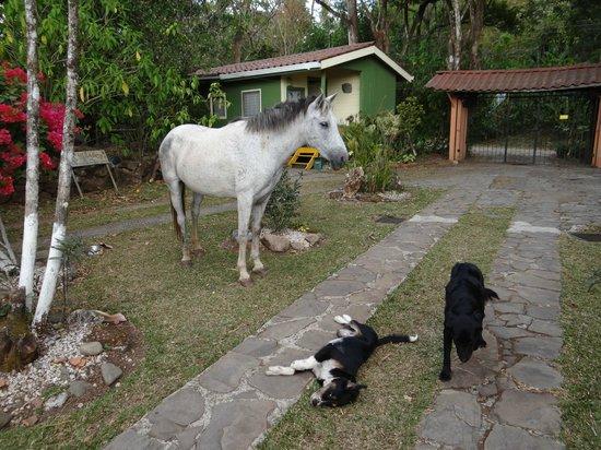Finca El Mirador: Haustiere