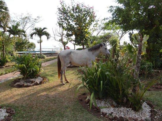 El Mirador: Garten + Pferd