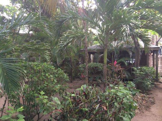 Las Rocas Resort & Dive Center: my cabana