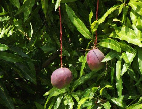 The Chopping Board Kitchen at MOJO: mango nel giardino