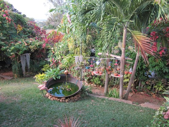 The Amazon Lodge B&B: Tropischer Garten