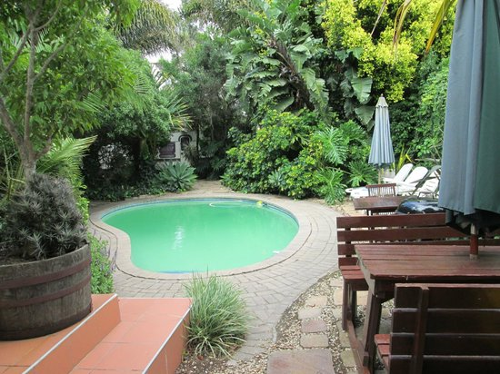Nottingham Country House: Secluded pool to wallow in.