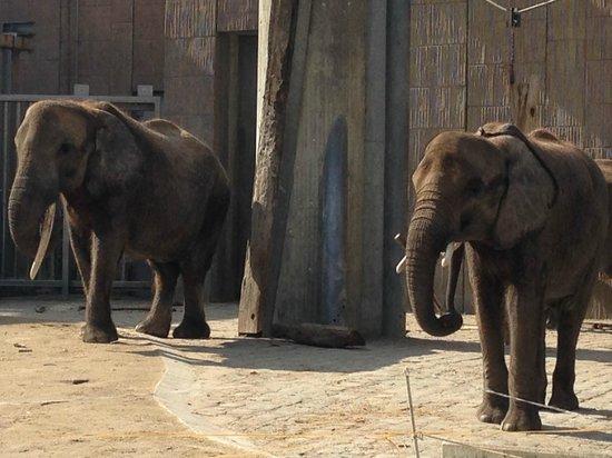 Tiergarten Schoenbrunn - Zoo Vienna : слоны
